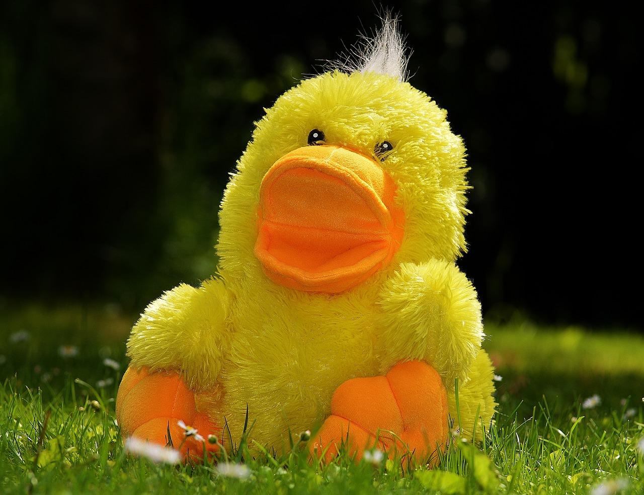 duck-783684_1280